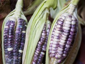 Purple Corn Displayed in Market, Cuzco, Peru by John & Lisa Merrill