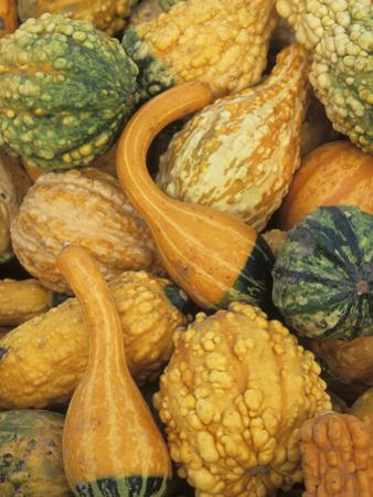 Shapes and Textures of Squash at Halloween, Acton, Massachusetts, USA by John & Lisa Merrill
