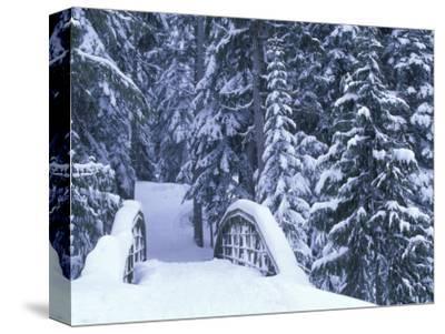Snow-Covered Bridge and Fir Trees, Washington, USA