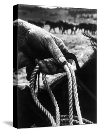 The Rough, Weathered Hand of an Oldtime Cowboy, Holding Rope