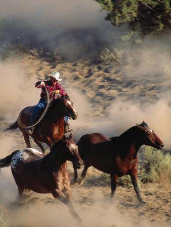 Cowboy Roping Horses