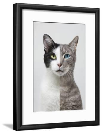 Composite Portrait of Two Different Cats
