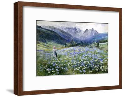 Alpin Meadow