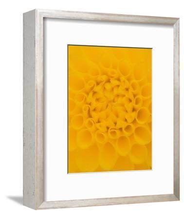 Yellow Dahlia Detail