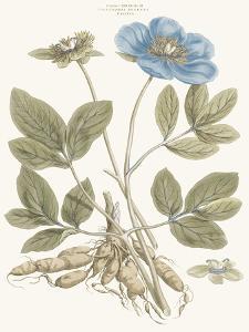 Bashful Blue Florals I by John Miller