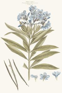 Bashful Blue Florals III by John Miller