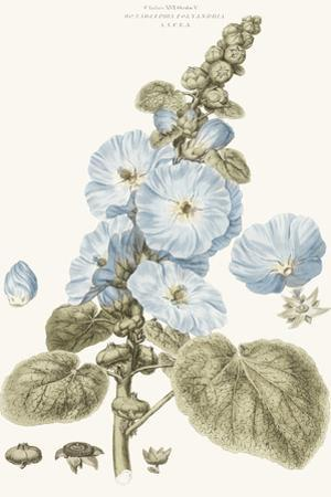 Bashful Blue Florals IV by John Miller