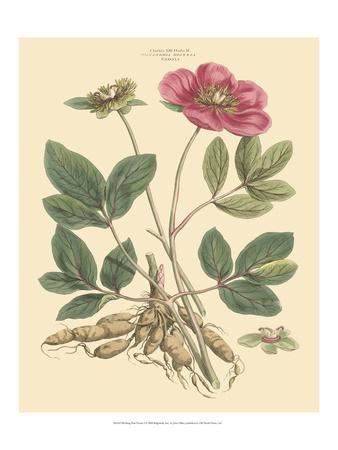 Blushing Pink Florals I