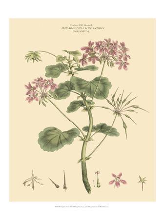 Blushing Pink Florals IV