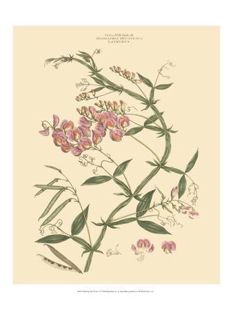 Blushing Pink Florals VI