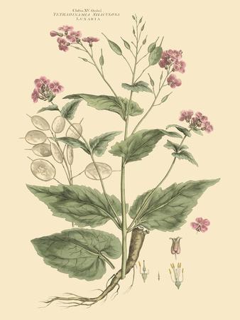 Blushing Pink Florals VII