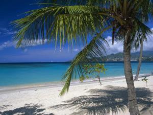 Palm Tee and Beach, Grand Anse Beach, Grenada, Windward Islands, Caribbean, West Indies by John Miller