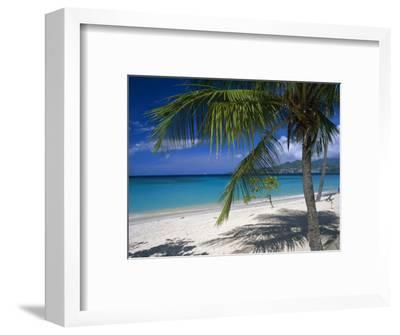 Palm Tee and Beach, Grand Anse Beach, Grenada, Windward Islands, Caribbean, West Indies