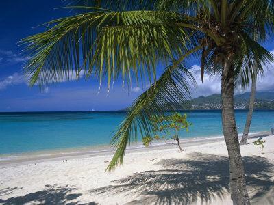 Palm Tee and Beach, Grand Anse Beach, Grenada, Windward Islands, Caribbean, West Indies