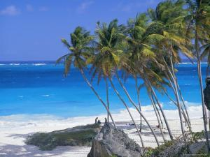 Palm Trees and Beach, Bottom Bay, Barbados, Caribbean, West Indies, Central America by John Miller