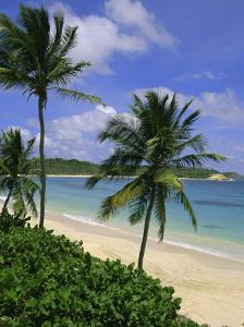 Palm Trees and Beach, Half Moon Bay, Antigua, Leeward Islands, Caribbean, West Indies by John Miller