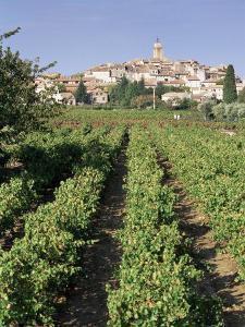 Vineyard, Cote Du Rhone, Sablet, Vaucluse, Provence, France by John Miller