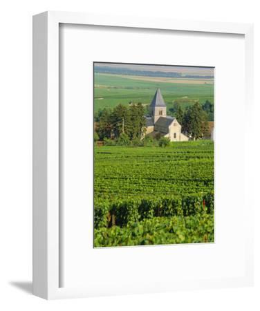 Vineyard, Oger, Champagne, France, Europe