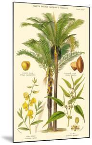 Piassava Palm, Jute, Sunn Hemp - Plants Used in Clothing & Cordage by John Nugent Fitch