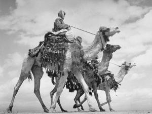 Arab Legionnaries Riding their Camels by John Phillips