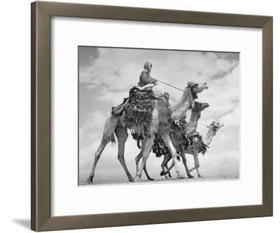 Arab Legionnaries Riding their Camels
