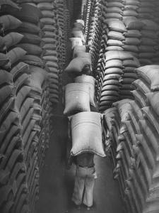 Brazilian Workers Carrying Large Sacks of Coffee Beans in Warehouse of Firm Lima, Noguera and Cia by John Phillips