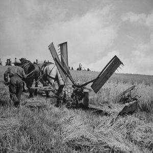 Farmer Harvesting Oats by John Phillips