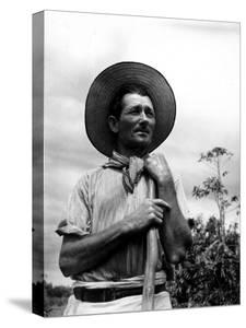 Italian Man Working in the Field, Cleaning the Coffee Trees by John Phillips