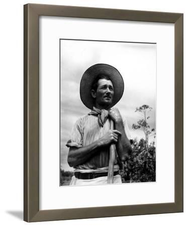 Italian Man Working in the Field, Cleaning the Coffee Trees