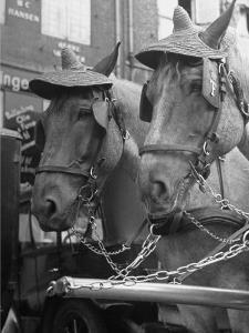 View of Beer Wagon Horses Wearing Straw Hats to Shade their Eyes from the Sun by John Phillips