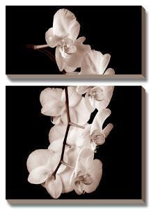 Orchid Dance I by John Rehner