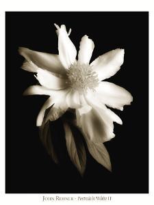 Portrait in White II by John Rehner