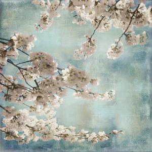 Aqua Blossoms II by John Seba