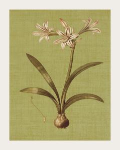 Botanica Verde I by John Seba