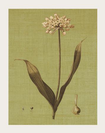 Botanica Verde III