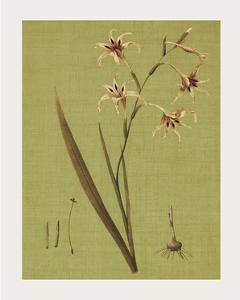 Botanica Verde IV by John Seba