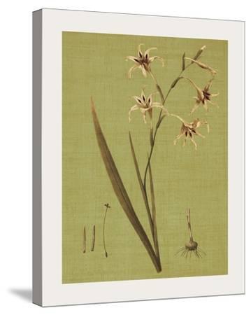 Botanica Verde IV
