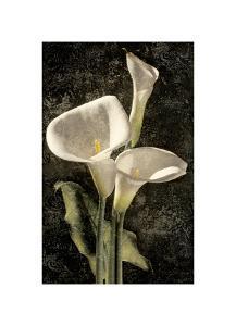 Callas I by John Seba