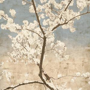 Cherry Blossoms I by John Seba