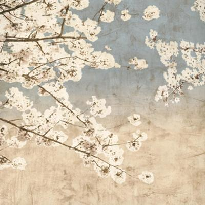 Cherry Blossoms II by John Seba