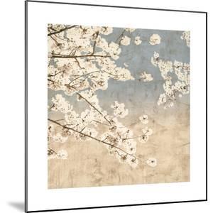 Cherry Blossoms II by John Seba