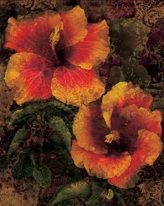 Hibiscus I by John Seba