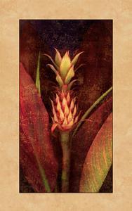 Pineapple by John Seba