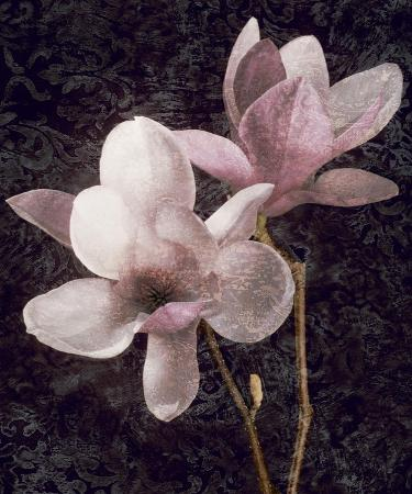john-seba-pink-magnolias-i