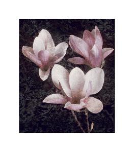 Pink Magnolias II by John Seba