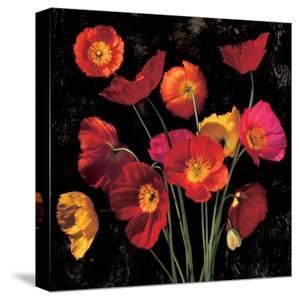Poppy Bouquet II by John Seba