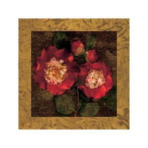 Red Camellias II by John Seba