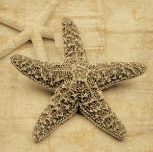 Starfish by John Seba