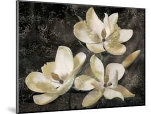 The Magnolia Tree by John Seba