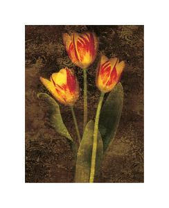 Three Tulips by John Seba